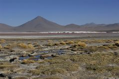 Laguna Colorada Royalty Free Stock Photo
