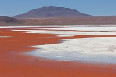 Laguna Colorada. The amazing Laguna Colorada in southern Bolivia with flamingos feeding Stock Images