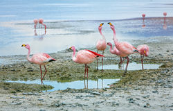 Laguna Colorada Foto de archivo