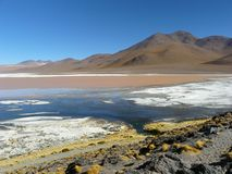 Laguna Colorada, Altiplano, Bolivia Fotografie Stock Libere da Diritti
