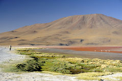 Laguna Colorada, Altiplano, Bolivian Andes. In the southwest part of the Bolivian Andes, in the province of Sud Lípez, part of Potosi, in the middle of the Stock Image