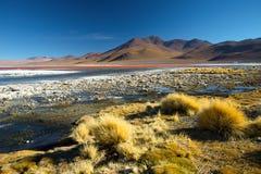 Laguna Colorada Berge von Bolivien, altiplano 3d sehr schöne dreidimensionale Abbildung, Abbildung lizenzfreie stockfotografie