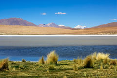 Laguna colorada, Bolivia. Laguna colorada with volcano in Potosi region, Bolivia Royalty Free Stock Photo
