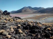 Laguna Colorada - Bolivia Fotos de archivo libres de regalías