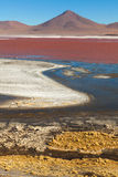 Laguna Colorada. Bolivia Stock Image