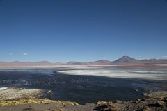 Laguna Colorada in Bolivia. Laguna Colorada, Bollivia - November 02, 2015: View over the colorful Laguna colorada in the Andes region Royalty Free Stock Photos