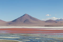 Laguna Colorada in Bolivia Royalty Free Stock Photo