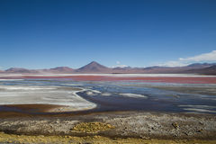 Laguna Colorada in Bolivia Stock Photos
