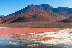 Laguna Colorada in Bolivia. Laguna Colorada in Reserva Nacional De Fauna Andina Eduardo Avaroa in Bolivia Stock Photo