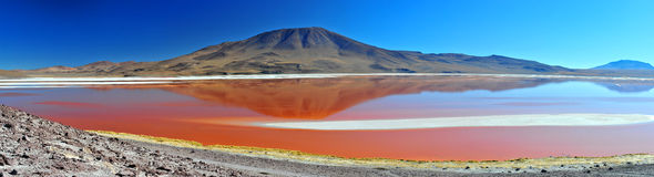 Laguna Colorada. In Bolivian Altiplano (Big Panorama royalty free stock photo