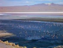 Laguna colorada in bolivian altiplano with flamingos Stock Photos