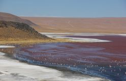 Laguna Colorada on the Bolivian Altiplano royalty free stock image