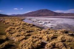 Laguna Colorada in Bolivian Altiplano. Laguna Colorada: Yellow grass sourrounding the red lake in the Bolivian Altiplano Stock Image