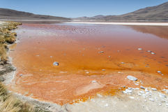 Laguna Colorada - Bolivien stockbild