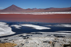 Laguna Colorada, Bolivien Stockbild