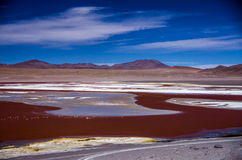 Laguna Colorada in Cordillera de Lipez, Bolivia Royalty Free Stock Photo
