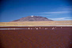 Laguna Colorada in Cordillera de Lipez, Bolivia royalty free stock images