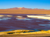 Laguna Colorada in Cordillera de Lipez Royalty Free Stock Images