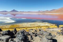 Laguna Colorada dans Uyuni, Bolivie images stock