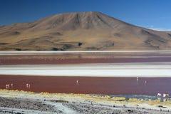Laguna Colorada. Eduardo Avaroa Andean Fauna National Reserve. Bolivia. Laguna Colorada is a shallow salt lake in the southwest of the altiplano of Bolivia Royalty Free Stock Images