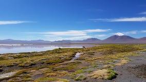 Laguna Colorada een gekleurd ondiep zout meer in het zuidwesten van altiplano van Bolivië royalty-vrije stock foto