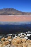 Laguna Colorada en Bolivia con vulcano Imagen de archivo