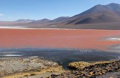 Laguna Colorada en el boliviano Altiplano foto de archivo libre de regalías