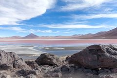 Laguna Colorada Flamingoes, Uyuni, Bolivia Royalty Free Stock Images