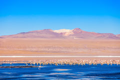 Laguna Colorada lake Stock Photo