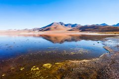 Laguna Colorada lake. Laguna Colorada, means Red Lake is a shallow salt lake in the southwest of the Altiplano of Bolivia Stock Image