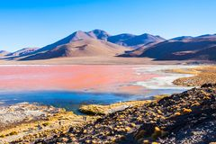 Laguna Colorada lake. Laguna Colorada (Red Lake) is a most beautiful lake in the Altiplano of Bolivia Royalty Free Stock Photos