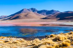 Laguna Colorada lake. Laguna Colorada (Red Lake) is a salt lake in the Altiplano of Bolivia Royalty Free Stock Images