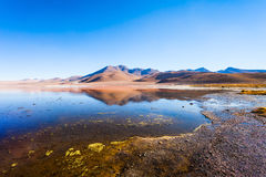 Laguna Colorada lake Royalty Free Stock Photo