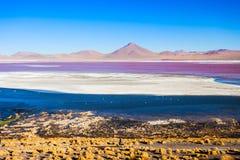 Laguna Colorada lake Royalty Free Stock Image
