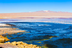 Laguna Colorada lake Royalty Free Stock Images