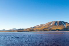 Laguna Colorada view, Bolivia. Laguna Colorada landscape,Bolivia. Beautiful bolivian panorama. Red water lagoon Stock Images