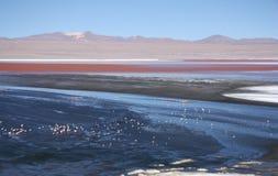 Laguna Colorada mit Flamingos in Bolivien Lizenzfreies Stockbild