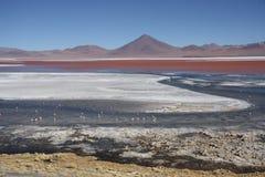 Laguna Colorada in Nationalpark Avaroa in Bolivien Stockfotografie