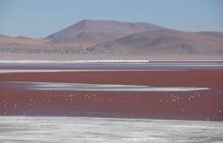 Laguna Colorada no boliviano Altiplano imagem de stock royalty free