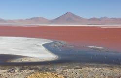 Laguna Colorada no boliviano Altiplano imagens de stock