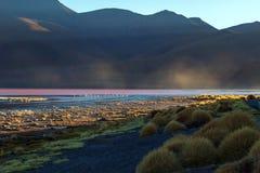 Laguna Colorada, ondiep zout meer in het zuidwesten van altiplano van Bolivië stock foto's