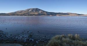 Laguna Colorada, op Altiplano dichtbij Uyuni binnen Eduardo Avaroa National Reserve in Bolivië bij 4300 m boven overzees - niveau stock afbeeldingen
