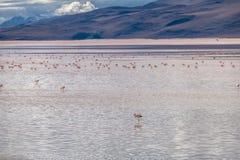 Laguna Colorada Red Lagoon in Bolivean altiplano - Potosi Department, Bolivia Stock Photo