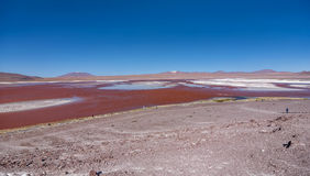 Laguna Colorada Red Lagoon, Bolivia Royalty Free Stock Image