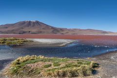 Laguna Colorada Red Lagoon, Bolivia Stock Images