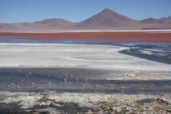 Laguna Colorada in Salar de Uyuni in Bolivien Stockbilder