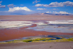 Laguna colorada in sud Lipez Altiplano reserva, Bolivia Royalty Free Stock Images