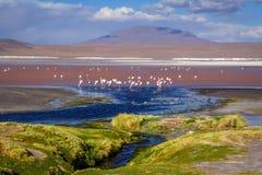 Laguna colorada in sud Lipez Altiplano reserva, Bolivia Stock Photography