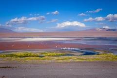 Laguna colorada in sud Lipez Altiplano reserva, Bolivia Stock Image