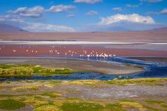Laguna colorada in sud Lipez Altiplano reserva, Bolivia Royalty Free Stock Images